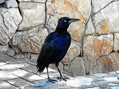 Photograph - Birds Eye 1 by Ron Kandt