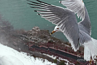 Art Print featuring the photograph Bird's Eye View by Charline Xia
