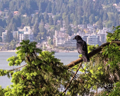 Photograph - Bird's Eye View by Cheryl Del Toro