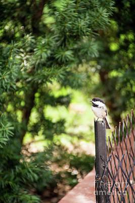 Photograph - Bird's Eye View by Deborah Klubertanz