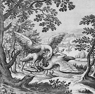 Birds Fighting From Musaeum Hermeticum, 1678 Art Print
