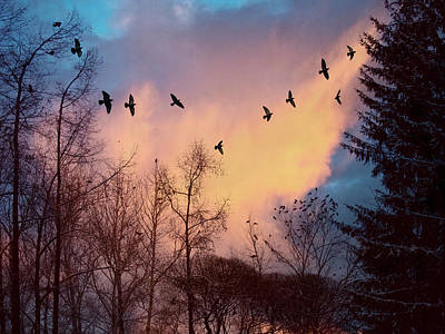 Art Print featuring the photograph Birds Fly by Vladimir Kholostykh