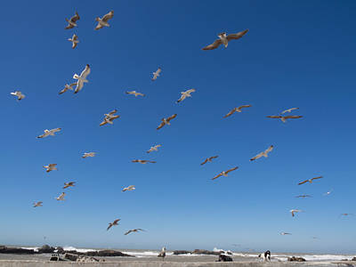 Of Birds Photograph - Birds Flying Along The Waters Edge by Panoramic Images