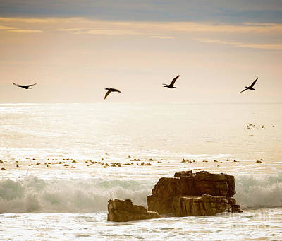 Photograph - Birds Flying Over Ocean by Tim Hester