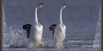 Photograph - Birds Foreplay Mating Dance by Navin Joshi