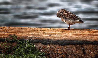 Photograph - Birds Got It Good by Debra Forand