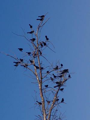 Birds Have Arrived Original