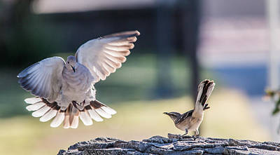 Dove Photograph - Birds by Hyuntae Kim