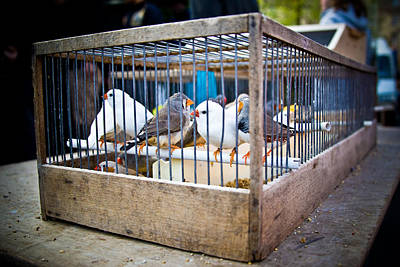 Photograph - Birds In A Cage by Nila Newsom