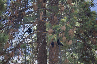 Photograph - Birds In A Tree by Donna L Munro