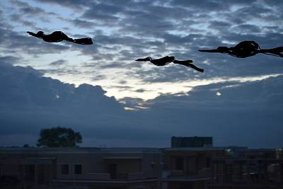 Photograph - Birds In Between Clouds by Anand Swaroop Manchiraju