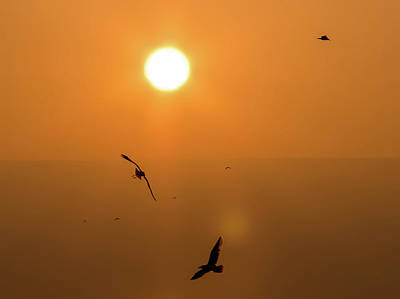 Photograph - Birds In Flight At Sunset by K Pegg