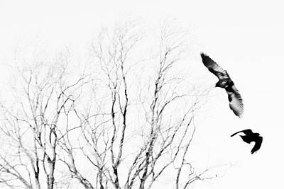 Black And White Horse Photography - Birds in flight by Charles Ray