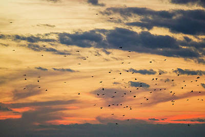 Photograph - Birds In Flight by Fran Gallogly