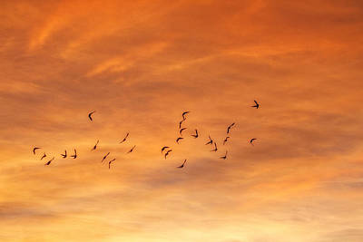 Photograph - Birds In Flight by Utah Images