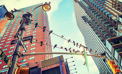 Birds In New York City Art Print