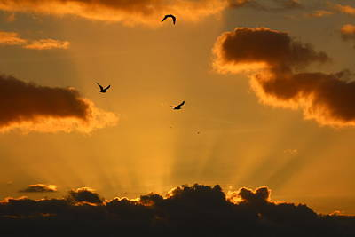 Photograph - Birds In Sunburst by Sean Sowell