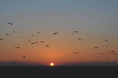 Photograph - Birds In Sunset by Haleh Mahbod