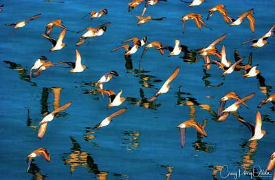Photograph - birds in the Bay by Craig Perry-Ollila