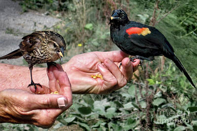 Photograph - Birds In The Hands by Jennie Breeze