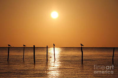Photograph - Birds In The Light Of The Sunrise by Four Hands Art