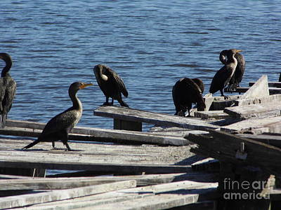 Birds Photograph - Birds In The Sun by D Hackett