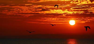 Birds In The Sun Art Print