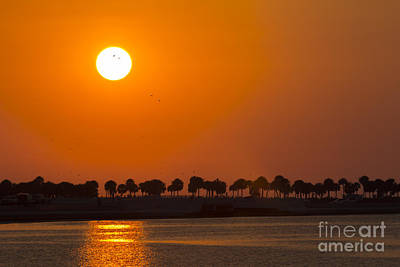Ocean Springs Photograph - Birds In The Sun by Marvin Spates