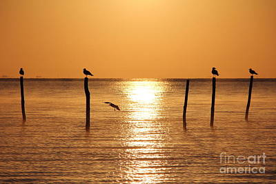 Photograph - Birds In The Sunrise by Four Hands Art