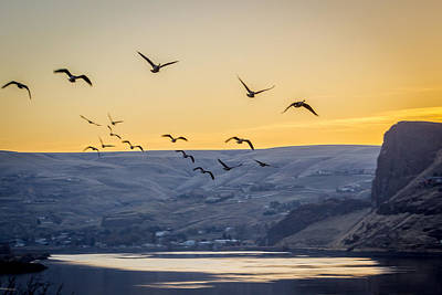 Birds In The Sunset Art Print by Brad Stinson