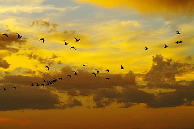 Birds In The Sunset Art Print by Jeff Swan