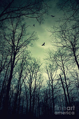 Photograph - Birds In The Woods by Debra Fedchin