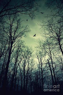 Photograph - Birds In The Woods by Debra Fedchin