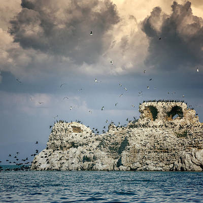 Seagull Photograph - Birds Island by Joana Kruse