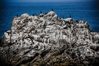Photograph - Bird's Island by Patrick Boening