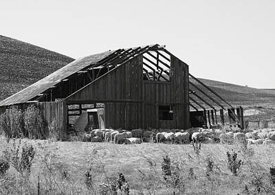 Solano County Photograph - Birds Landing Barn by Troy Montemayor