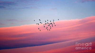 Photograph - Birds Migration by Anna Om