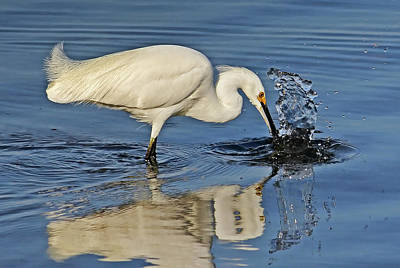 Photograph - Birds - Morning Catch by HH Photography of Florida