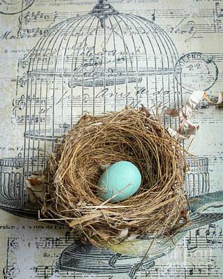 Bird Cage Photograph - Birds Nest by Edward Fielding