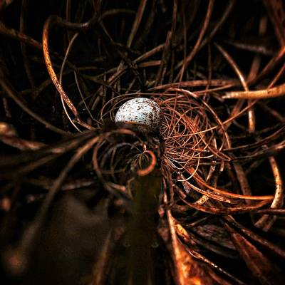 Photograph - Bird's Nest by Paul Wilford