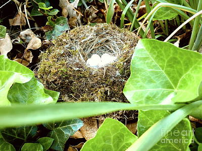 Photograph - Birds Nest Photograph Micro World Fine Art Landscape Photograph Color By Master Photographer Tim Hov by Tim Hovde