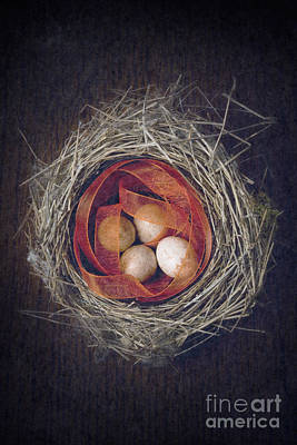 Photograph - Bird's Nest With Eggs And Ribbon by Clayton Bastiani