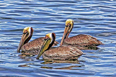 Photograph - Birds Of A Feather by HH Photography of Florida