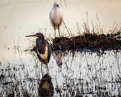 Photograph - Birds Of A Feather by Les Greenwood