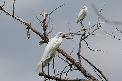 Photograph - Birds Of A Feather by Trent Mallett