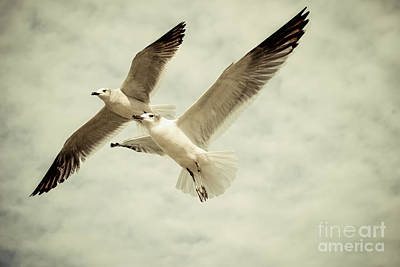 Photograph - Birds Of Grace by Kathleen K Parker