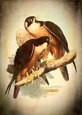 Birds Of Prey 2 Art Print