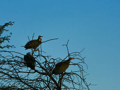 Photograph - Birds Of Prey by Karen Zuk Rosenblatt