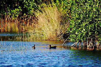Photograph - Birds Of The Marsh by Debbie Oppermann