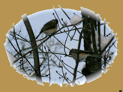 Photograph - Birds Of Winter Snow by Debra     Vatalaro